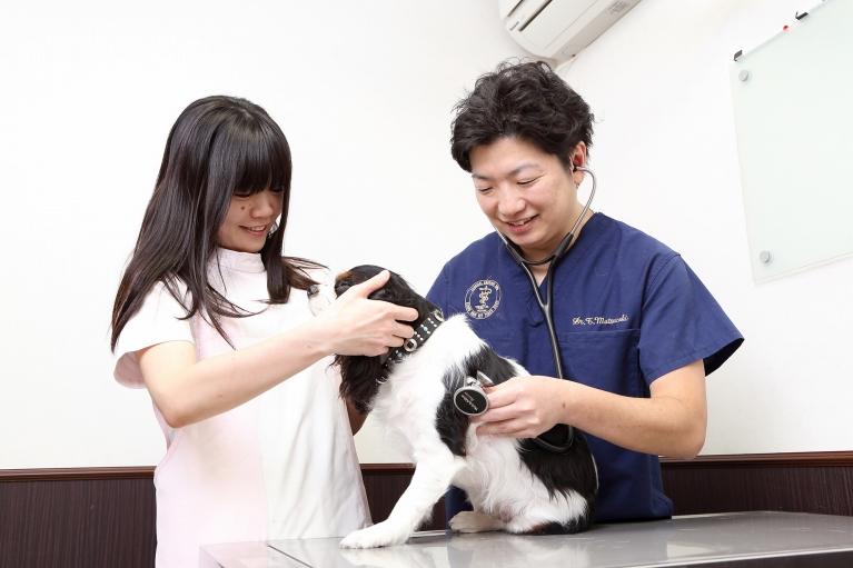 心臓病を専門に学んだ獣医師による治療